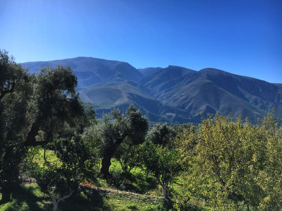 The Orgiva Mountains and orange groves...
