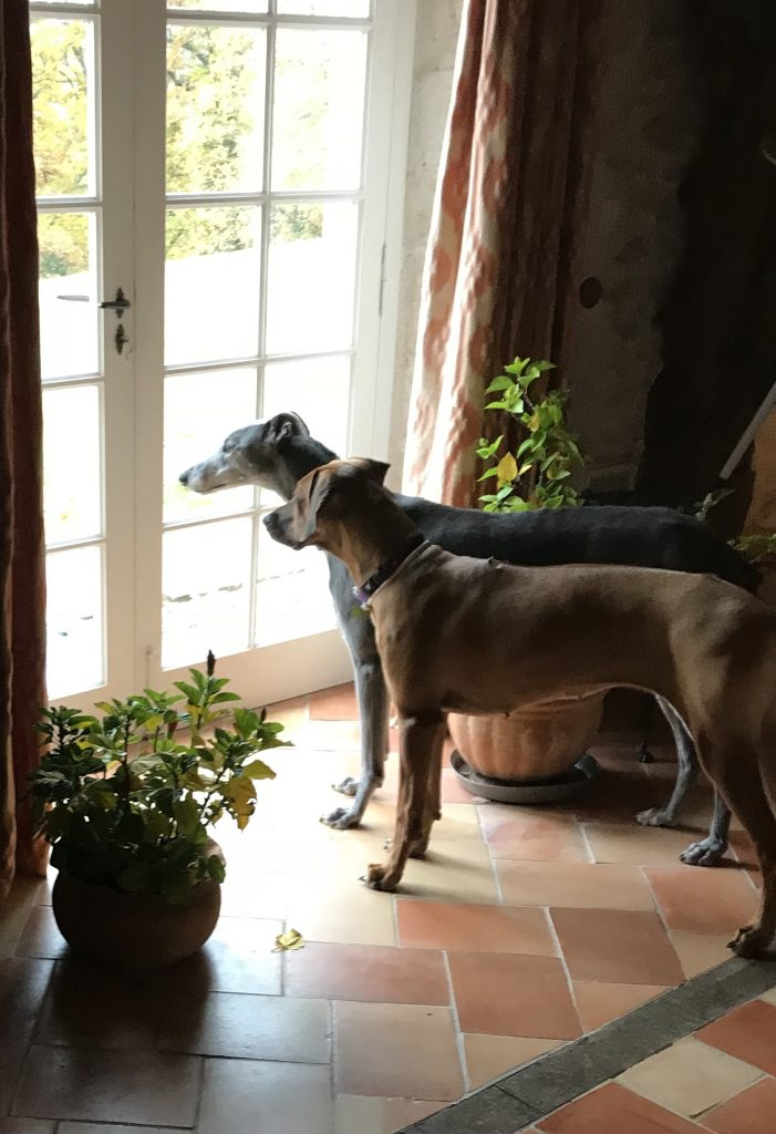 Our beloved Sir Maxelot sharing a window view with his latest fan... Tanzi.